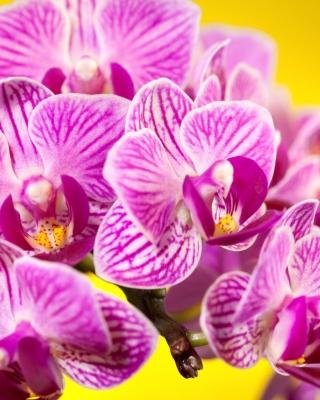 Pink orchid - Obrázkek zdarma pro Nokia Asha 311