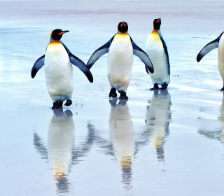 King Penguins - Obrázkek zdarma pro iPad Air