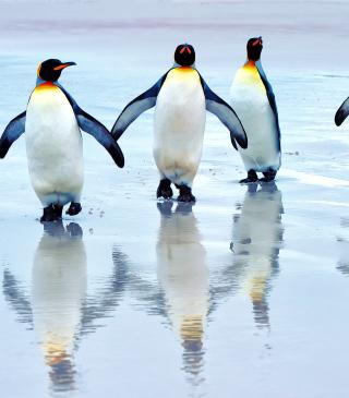 King Penguins - Obrázkek zdarma pro Nokia Asha 305