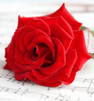 Red Rose Music - Obrázkek zdarma pro 320x320