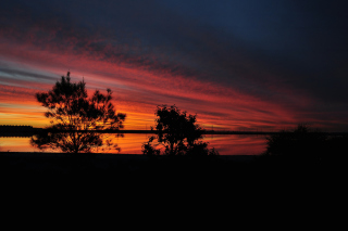 Red Sunset And Dark Tree Silhouettes Wallpaper for Android, iPhone and iPad