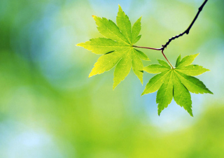 Free Fresh Leaves Picture for Android, iPhone and iPad