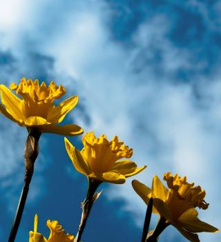 Autumn Flowers - Obrázkek zdarma pro 1024x1024