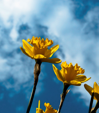 Autumn Flowers - Obrázkek zdarma pro Nokia Asha 300