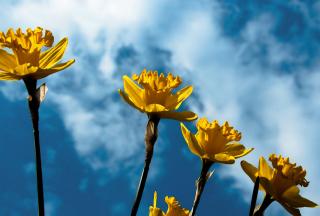 Autumn Flowers - Obrázkek zdarma pro Nokia Asha 205