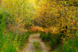Autumn Path Picture for Android, iPhone and iPad
