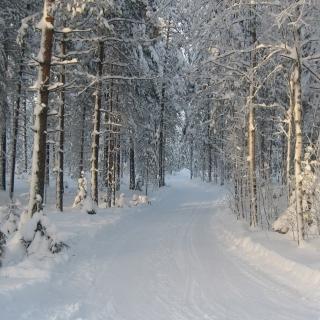 Winter snowy forest - Obrázkek zdarma pro iPad 2