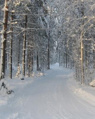 Winter snowy forest - Obrázkek zdarma pro 352x416