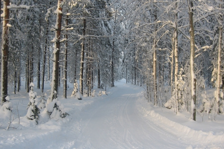 Winter snowy forest wallpaper
