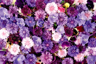 Flower carpet from cornflowers, bluebells, violets papel de parede para celular
