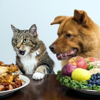 Dog and Cat Dinner - Obrázkek zdarma pro 1024x1024
