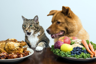 Dog and Cat Dinner - Obrázkek zdarma pro Widescreen Desktop PC 1440x900