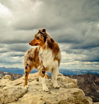 Dog On Top Of Mountain - Obrázkek zdarma pro iPad 2