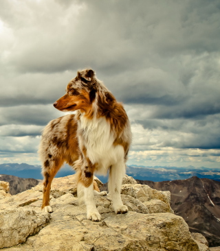 Dog On Top Of Mountain - Obrázkek zdarma pro iPhone 6