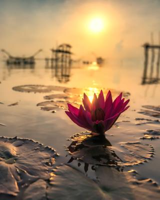 Lotus on Thailand Pond in Kumphawapi - Obrázkek zdarma pro 240x400