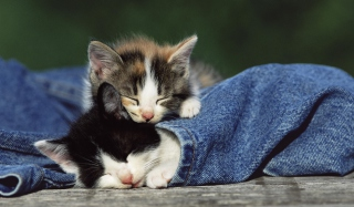 Cute Cats And Jeans Wallpaper for Android, iPhone and iPad