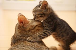 Kitten's Kiss - Obrázkek zdarma pro Samsung Galaxy S4