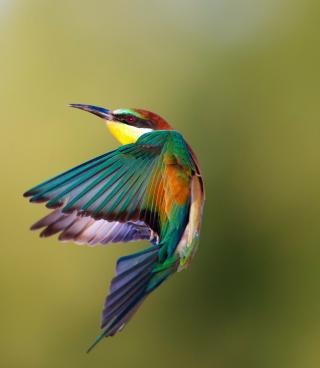 Golden Bee-Eater - Obrázkek zdarma pro iPhone 5
