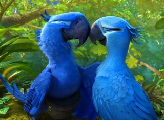 Rio 2 Picture for Android, iPhone and iPad