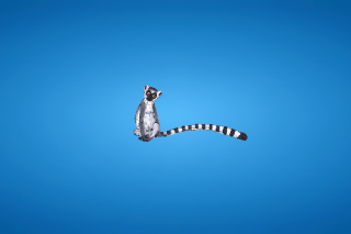 Lemur On Blue Background - Obrázkek zdarma pro Android 600x1024