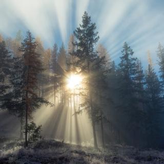 Sunlights in winter forest - Obrázkek zdarma pro 128x128