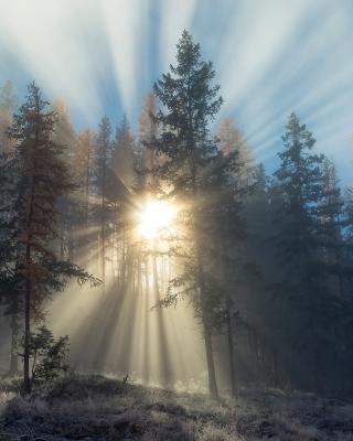 Sunlights in winter forest - Obrázkek zdarma pro 352x416