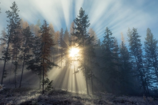 Sunlights in winter forest Wallpaper for Android, iPhone and iPad