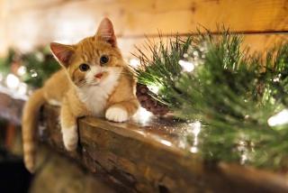 Christmas Kitten - Fondos de pantalla gratis para Sony Ericsson XPERIA PLAY