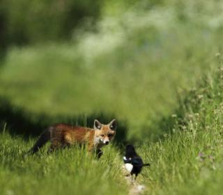 Little Fox Hunting - Obrázkek zdarma pro iPad