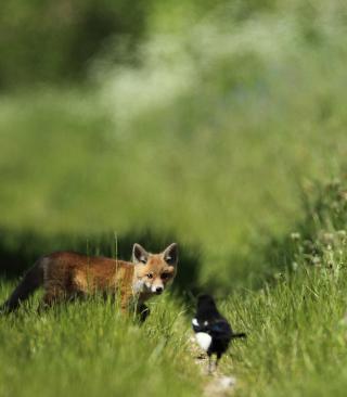 Little Fox Hunting - Obrázkek zdarma pro Nokia C1-01
