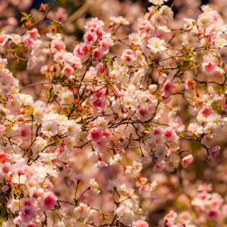 Spring flowering macro - Obrázkek zdarma pro 320x320