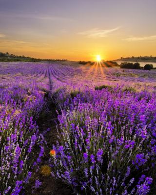 Sunrise on lavender field in Bulgaria - Obrázkek zdarma pro Nokia C1-00