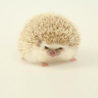 Evil hedgehog - Obrázkek zdarma pro 320x320