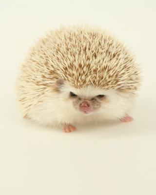 Evil hedgehog - Obrázkek zdarma pro Nokia C7