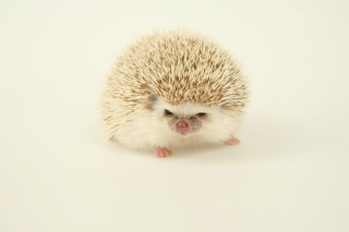 Free Evil hedgehog Picture for Android, iPhone and iPad