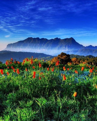 Spring has come to the mountains Thailand Chiang Dao - Obrázkek zdarma pro 360x480