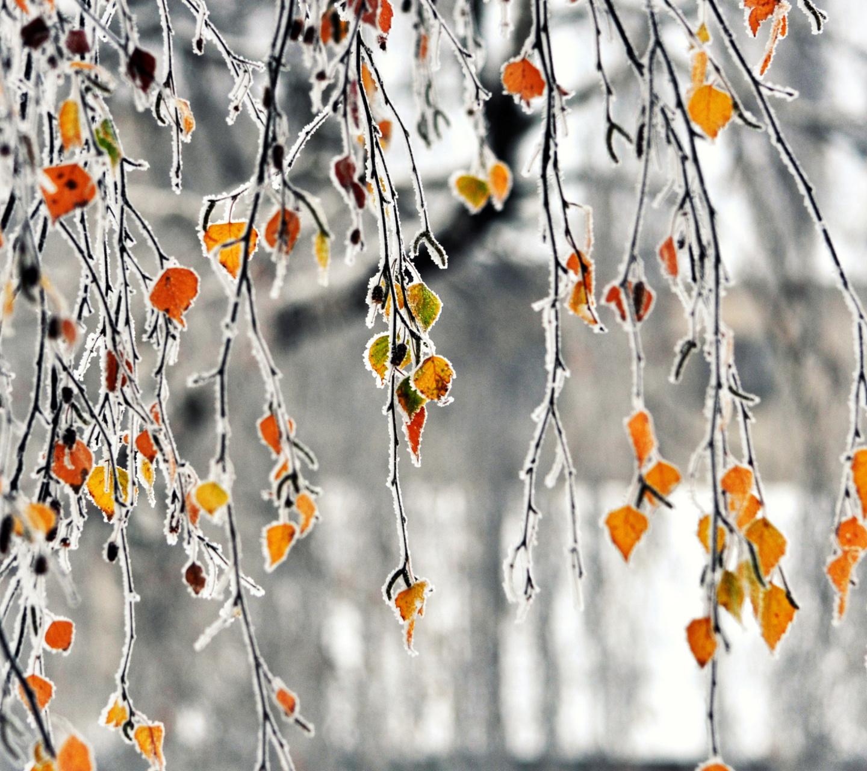 Картинки осень для леново