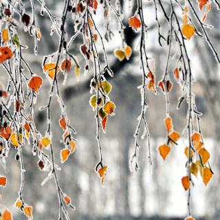 Autumn leaves in frost - Obrázkek zdarma pro iPad 3