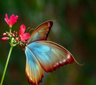 Big Butterfly - Obrázkek zdarma pro 128x128