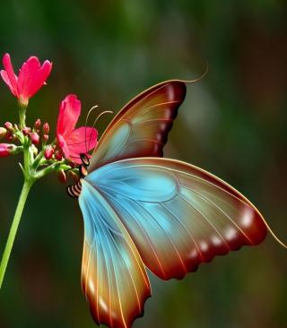 Big Butterfly - Obrázkek zdarma pro 128x160