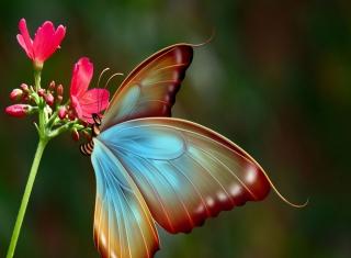 Big Butterfly - Obrázkek zdarma pro 1440x1280