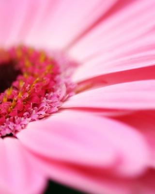 Pink Gerbera Close Up - Obrázkek zdarma pro 360x480