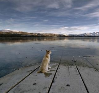 Dog And Lake - Obrázkek zdarma pro iPad mini 2