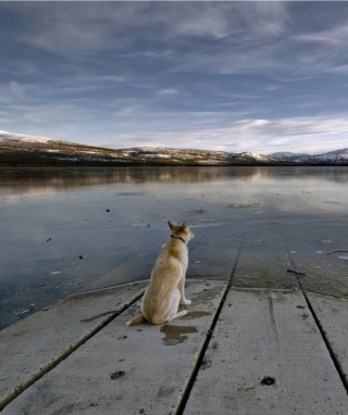 Dog And Lake - Obrázkek zdarma pro Nokia Asha 203