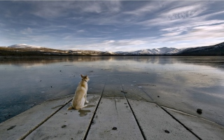 Dog And Lake - Obrázkek zdarma pro Android 540x960