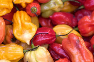 Bell Pepper Picture for Android, iPhone and iPad