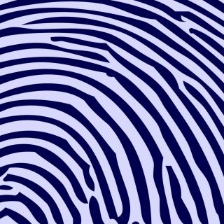 Zebra Pattern - Obrázkek zdarma pro iPad 3