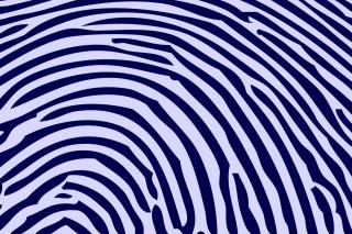 Zebra Pattern - Obrázkek zdarma pro Google Nexus 7