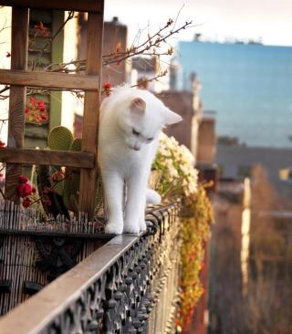 Cat On Balcony - Obrázkek zdarma pro 176x220