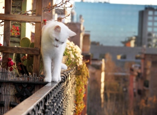 Cat On Balcony - Obrázkek zdarma pro Samsung B7510 Galaxy Pro